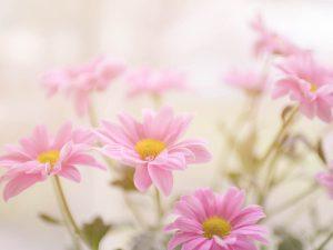 photo-flower